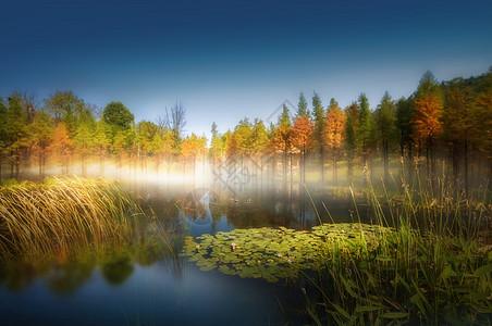 美好的生态环境图片