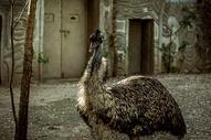 北京动物园500696614图片