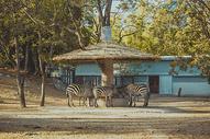 北京动物园图片