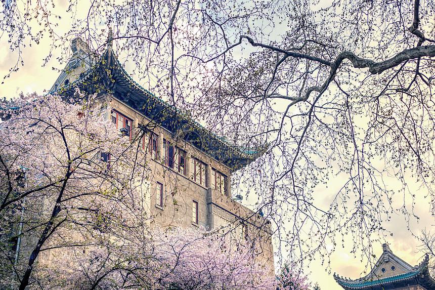 武汉大学樱花季图片