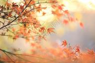 秋天的树图片