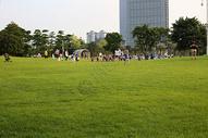 公园绿色草地图片