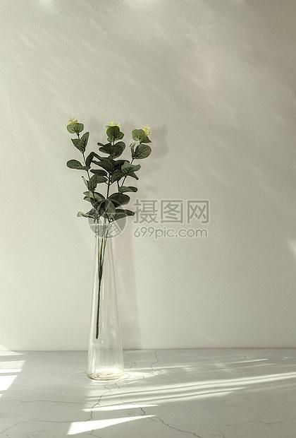 小清新植物图片