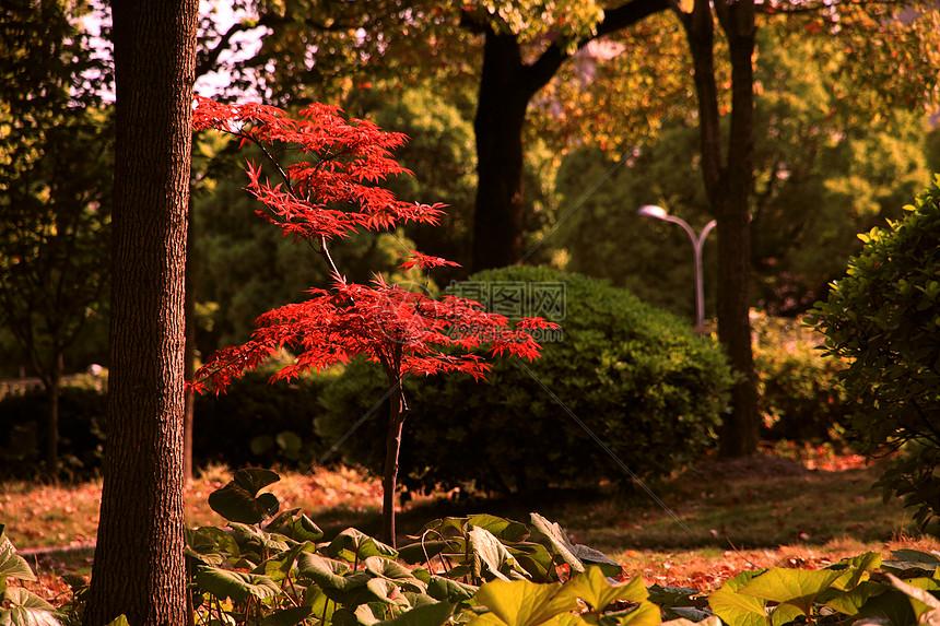 秋天公园美景图片