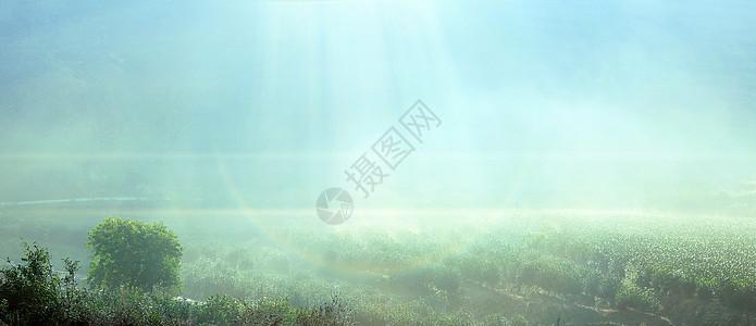 高山茶园图片