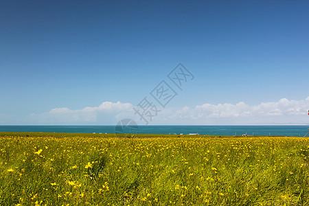 秋天的油菜花和青海湖图片