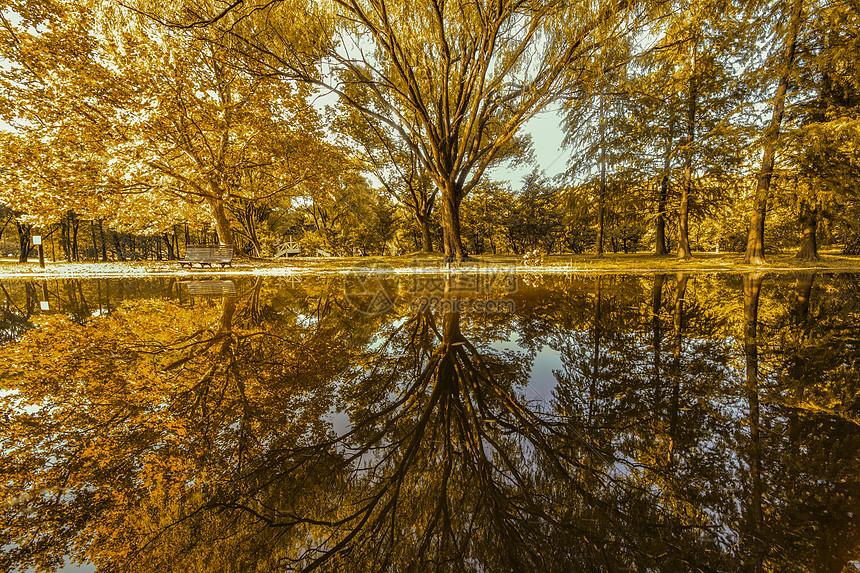 共青森林公园图片
