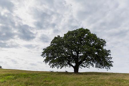 一棵树的囹�a_一棵树蓝天