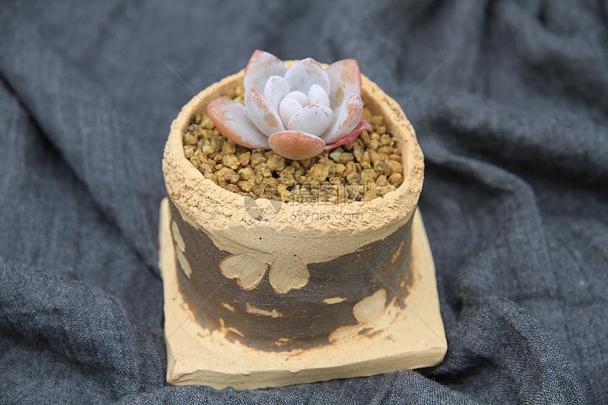 多肉植物 雪莲 版画陶盆图片