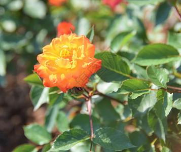 游辰山植物园图片