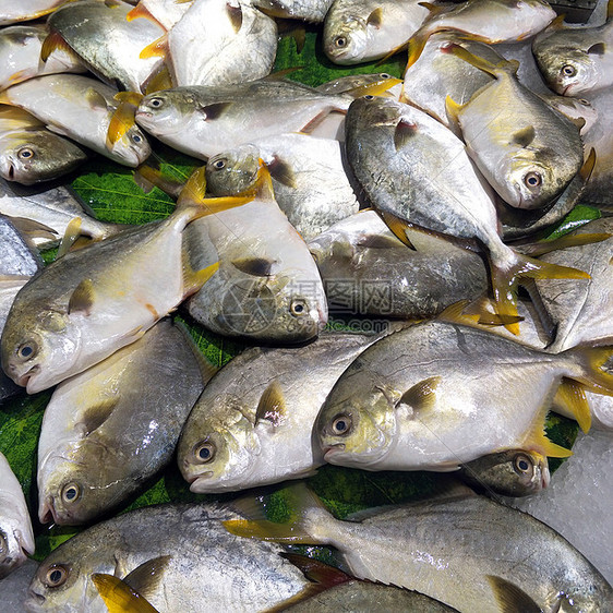 冰鲜鱼图片