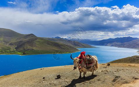 西藏羊左雍措湖美丽风光图片