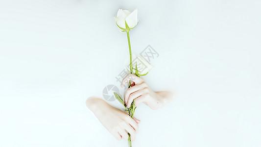 牛奶浴中手持白玫瑰图片