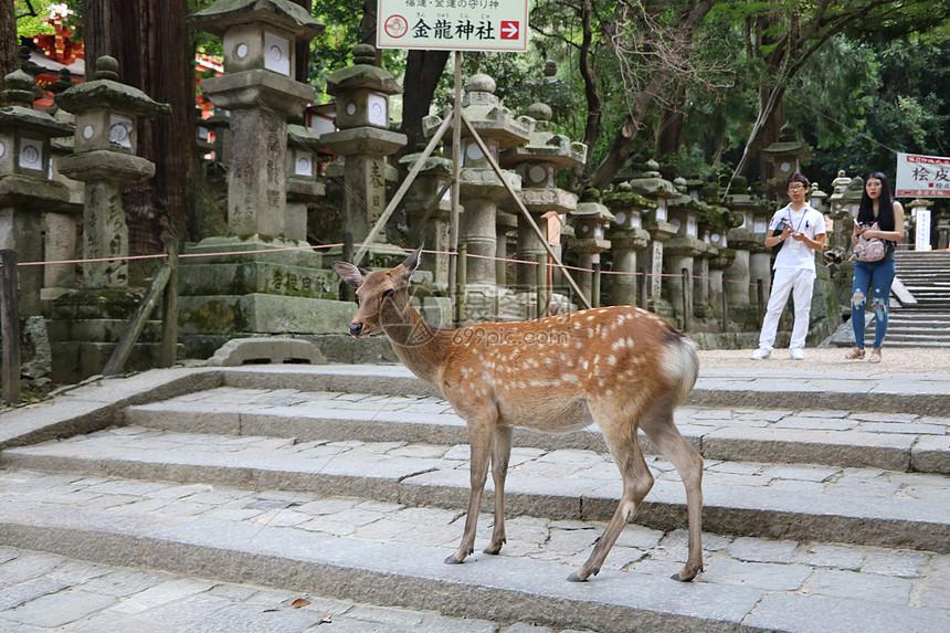 日本旅行随拍图片