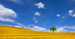 金色的麦田图片