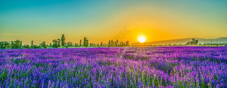 薰衣草庄园的落日图片