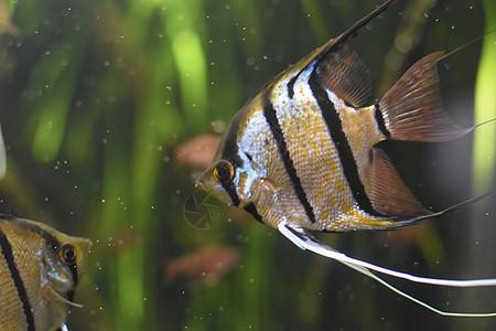水族馆里漂亮的鱼图片