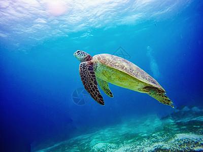 海洋世界海龟图片