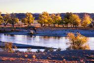 北疆河边秋色图片