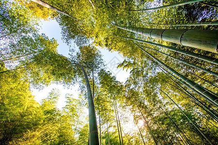 伸向天空的竹子图片