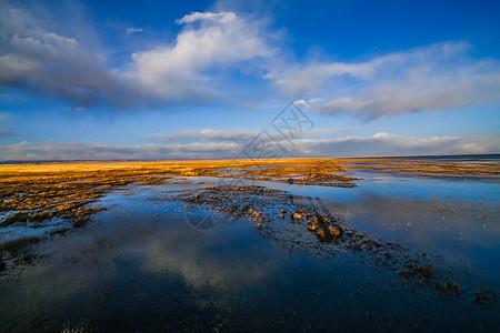 青海湖鸟岛图片