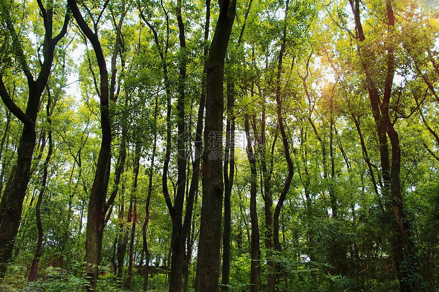 森林 图片