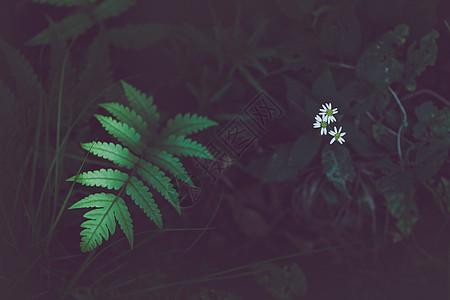 山林里的花草树木图片