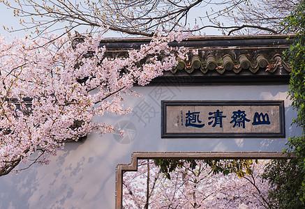 无锡鼋头渚樱花盛开图片