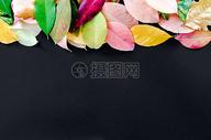 黑色背景上的落叶图片