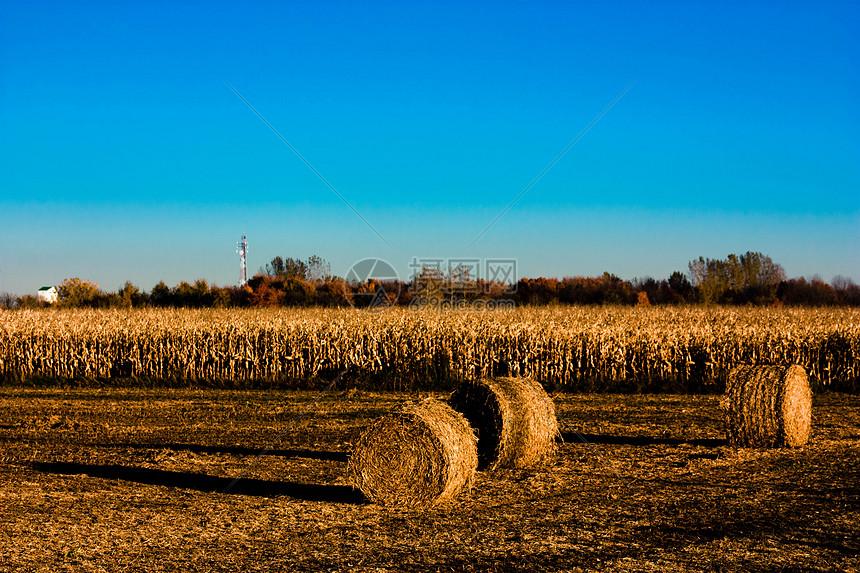 秋天田园中的草堆图片