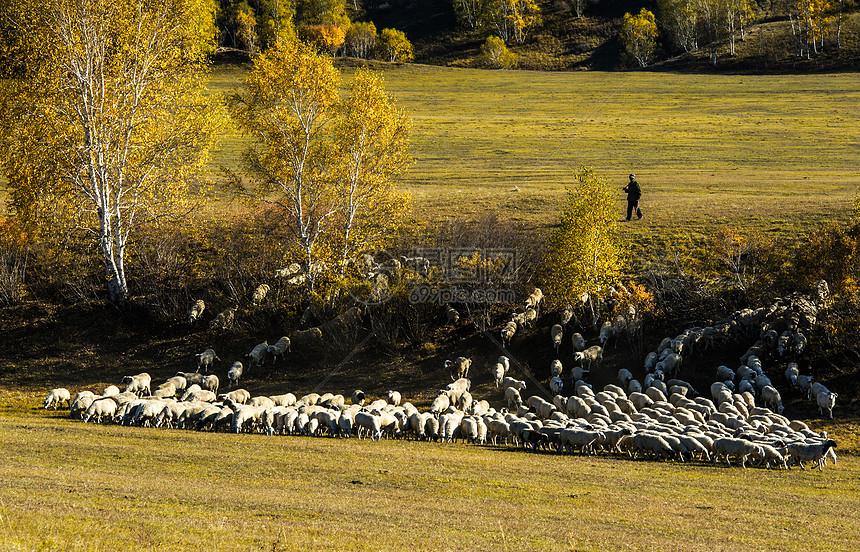 坝上牧羊图片