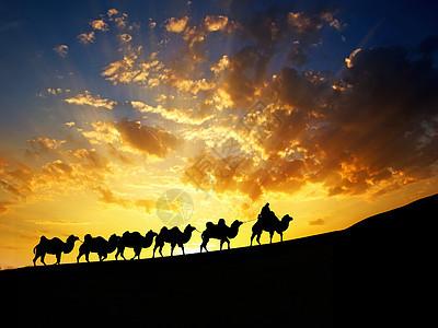 夕阳下的沙漠和骆驼剪影图片