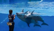 驯兽师与海豚图片
