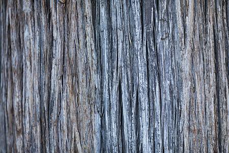 千年老树的树根图片素材 免费下载 jpg图片格式 高清图片500261977