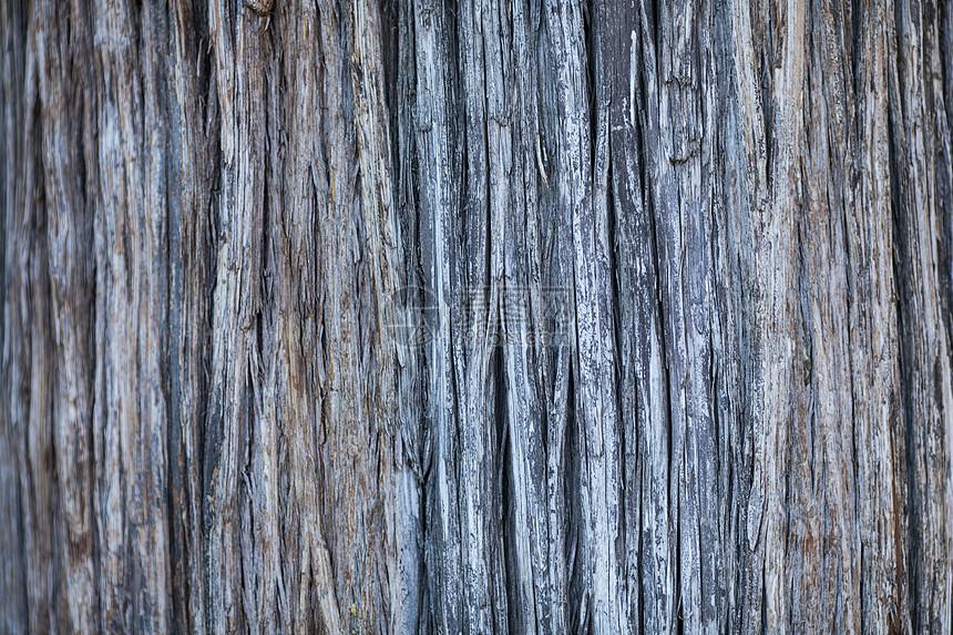 老树的木纹图片