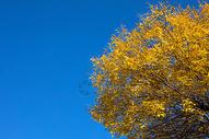 蓝天下的树叶500713266图片