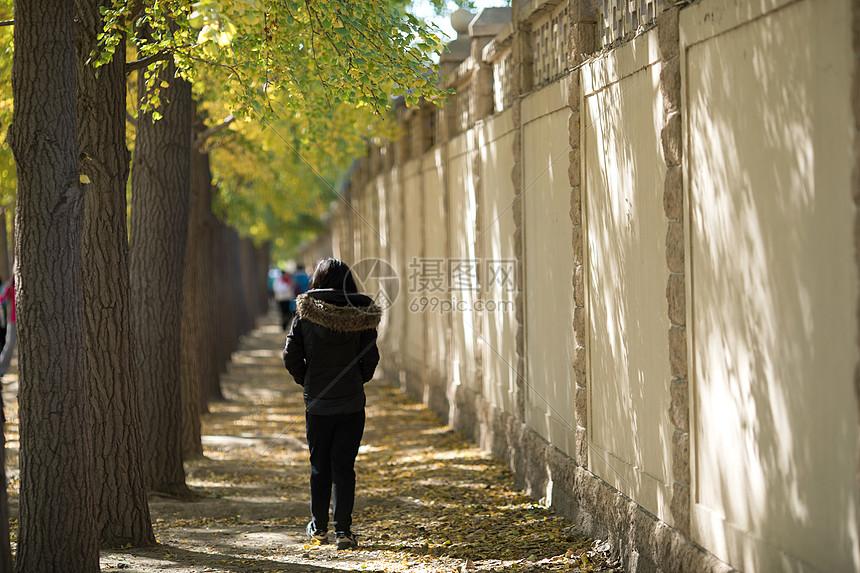 北京钓鱼台宾馆银杏大道图片