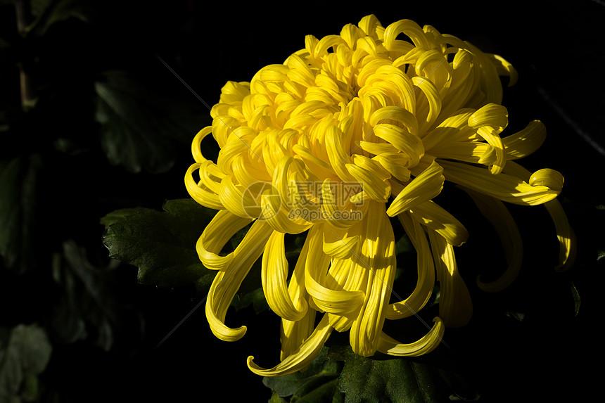 深秋赏菊图片