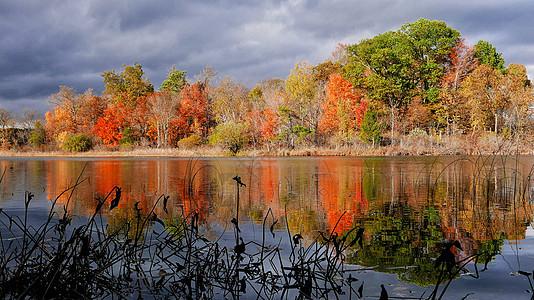 秋天的Ann Arbor-Michigan US图片