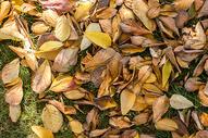 深秋的落叶图片