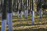 深秋树林里满是落叶图片