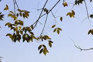 树叶留白简约图片