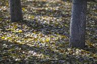 秋天森林里落叶满地图片