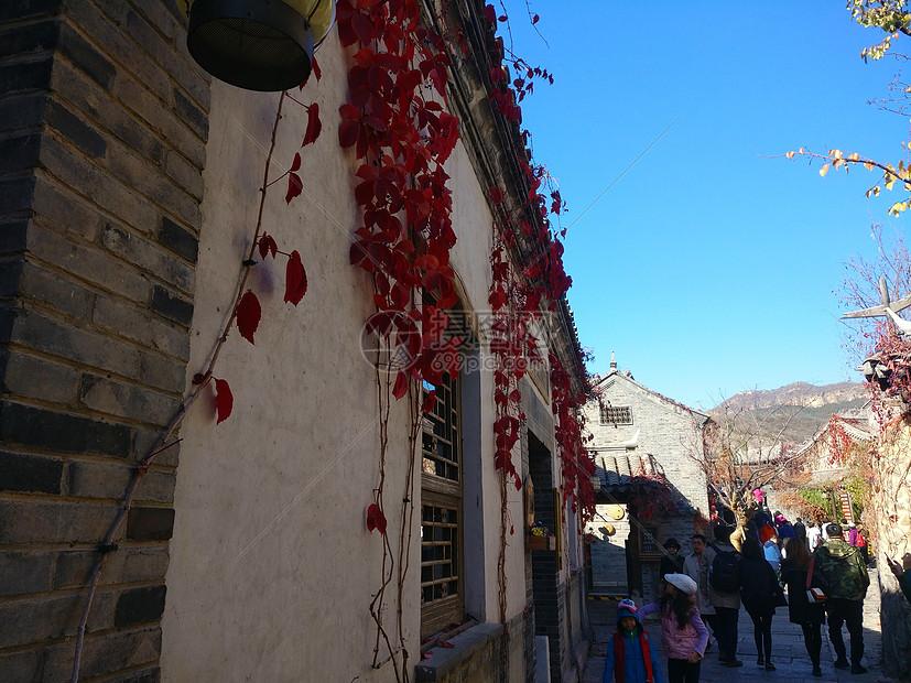 秋天枫叶红图片