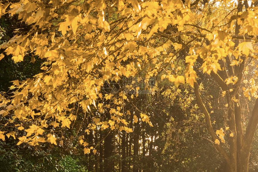 大明湖的秋季菊花展图片