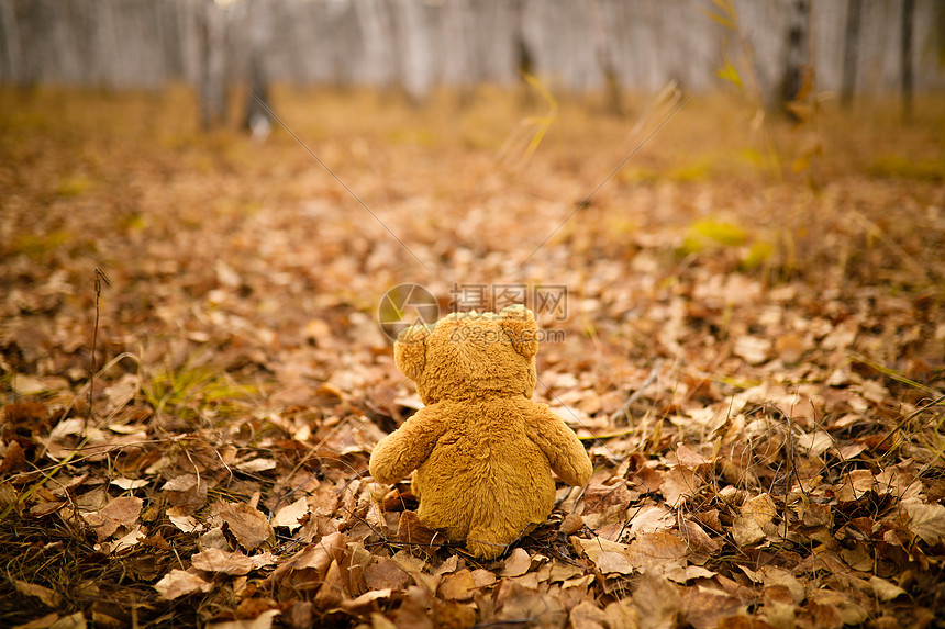 秋日里的泰迪熊图片