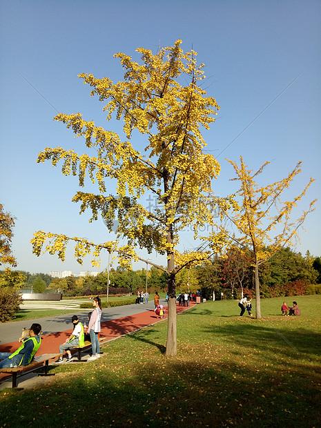 秋天的气息图片