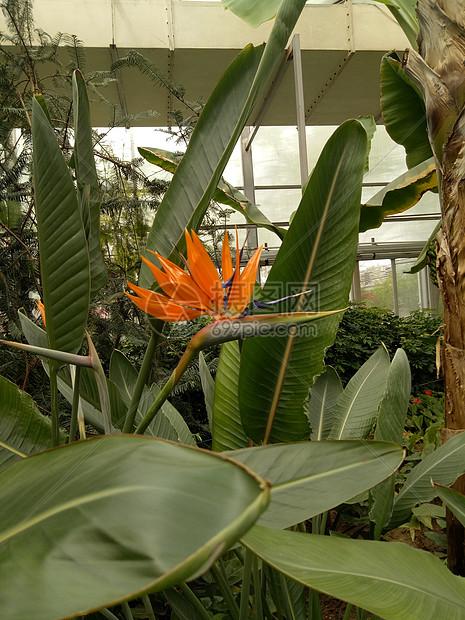 植物园图片
