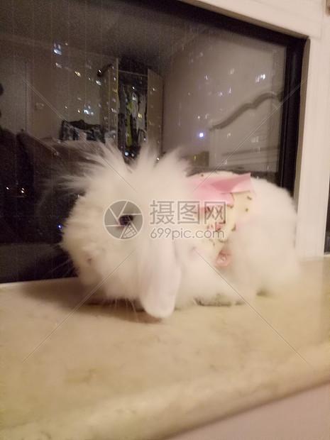 萌萌兔-糖糖图片