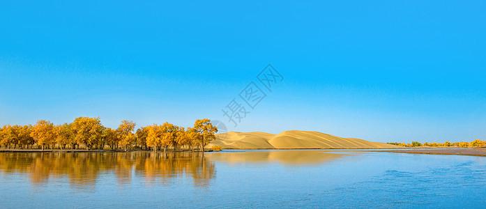 水上胡杨与沙漠图片